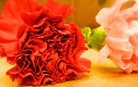 Carnations and Cookies