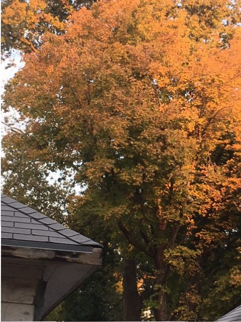 Tree next to house