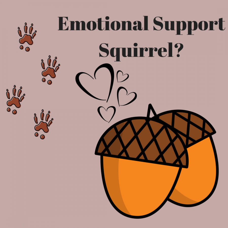 Emotional Support Squirrel?