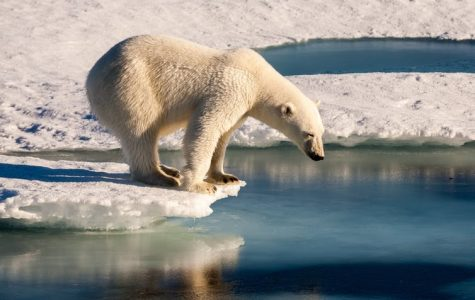 The issue of climate change is ongoing, what can we do to help save the bears?