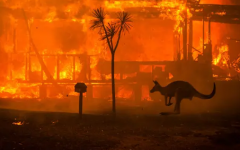 Animals run for cover from the bush fires in Australia.