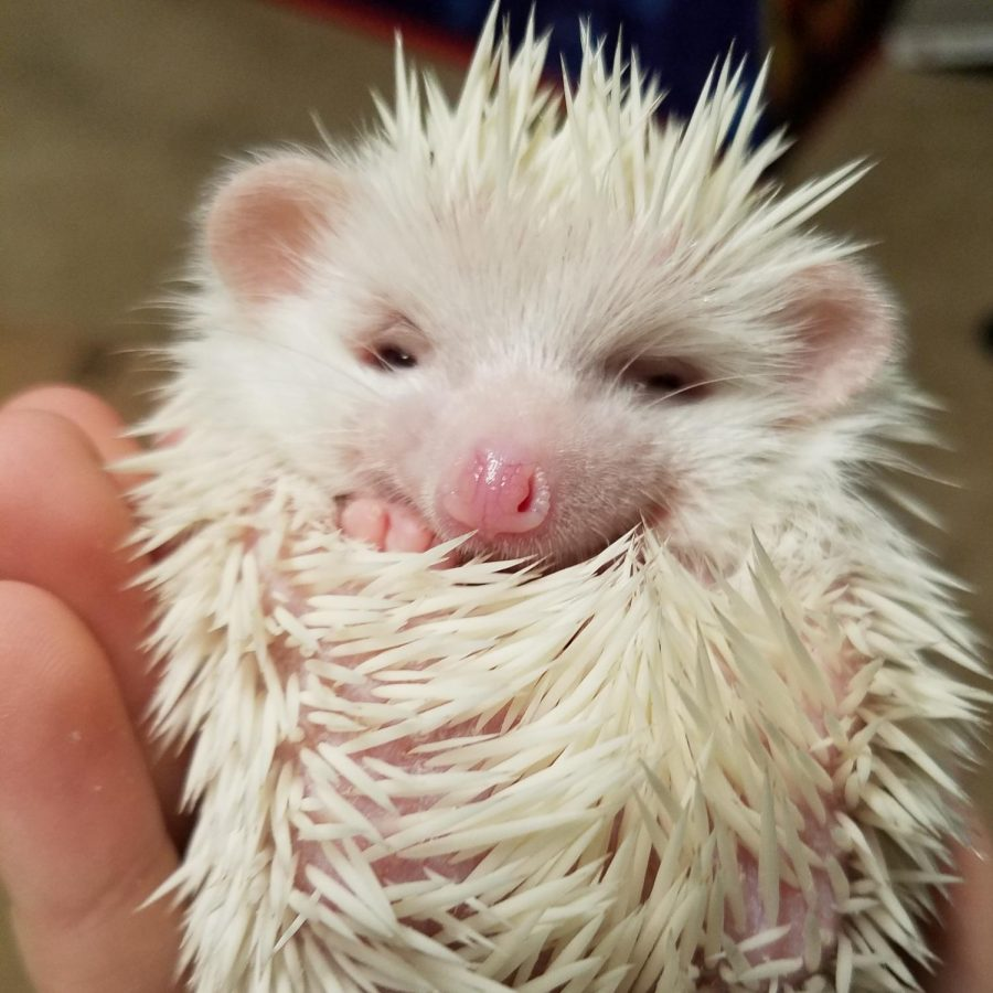 Macyn Ward's son, Riceball, right after his first bath.